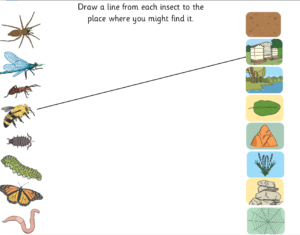 Insects and their habitat matching game
