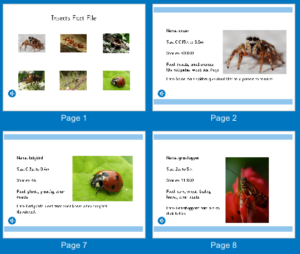 Insect fact file cards