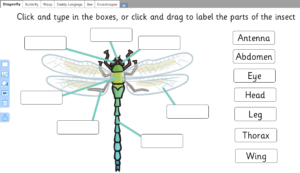 Parts of an insect labelling game